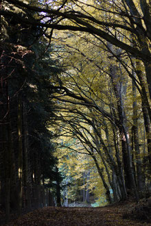 Waldweg vor der Hundeschule