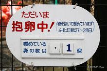 神戸市立王子動物園のフラミンゴの抱卵中の案内板