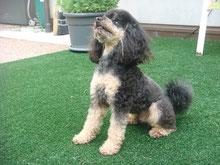 Click für Obligatorische Hundekurse SKN