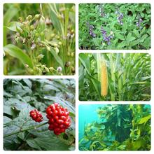 saiカラー 植物