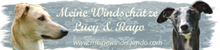 Die Windis