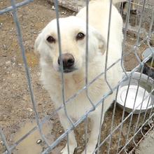 ANCA Helps Animals ⏰~2013 📐~35-40cm