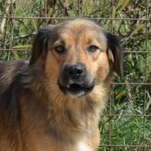 ANCA Helps Animals ⏰~2015 📐~45cm