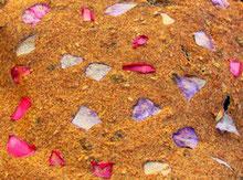 amande, tournesol, graine germées,basse température,déshydratation,déshydrateur