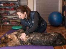 Tierphysiotherapeutin Conny Scholze-Gotthardt bei der Arbeit