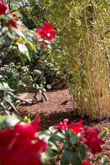 Sommerpflege für Ihren Garten, Tipps von Gartenpflege Hannover
