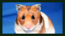Goldhamster Meerschweinchen Gehege Nagarium Käfig Vivarium Nager Kaninchen Mäuse Maus Hamster Zwerghamster Zwergkaninchen Farbmaus Rennmaus