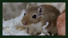 Farbmaus Rennmaus Meerschweinchen Gehege Nagarium Käfig Vivarium Nager Kaninchen Mäuse Maus Hamster Zwerghamster Zwergkaninchen