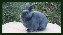 Kaninchen Meerschweinchen Gehege Nagarium Käfig Vivarium Nager Mäuse Maus Hamster Zwerghamster Zwergkaninchen Farbmaus Rennmaus