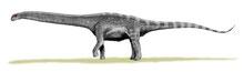 Bild eines Argentinosaurus