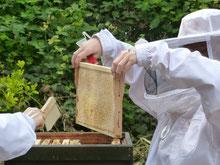 Bild: die Arbeit an Bienenvölkern