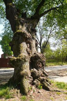 Baum auf einer Wasserader