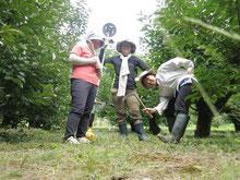 龍山農作業体験&交流『柿畑の草取りボランティア』