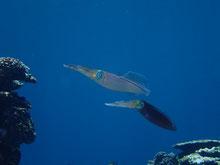石垣島でのんびりダイビング「㊗250」