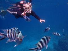 石垣島でのんびり体験ダイビング「夏休み」