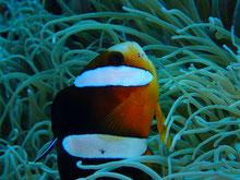 石垣島でのんびりダイビング「クリーニング」