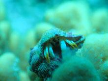石垣島でのんびりダイビング「ヤドカリ」