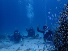 石垣島でのんびりダイビングポイント「デバパラ」