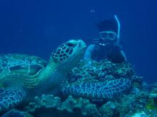 石垣島でのんびりダイビング「ウミガメに遭遇」