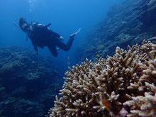 石垣島でのんびりダイビング「サンゴ礁エリア」