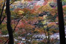 「紅葉の香嵐渓」