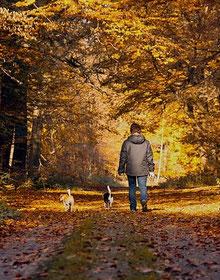 Deux chiens et un homme se promènent dans les bois par coach canin 16 education canine charente
