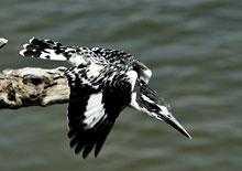 Kingfisher auf dem Weg zum Erfolg!