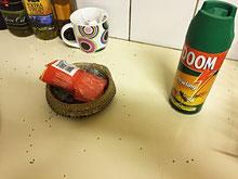 """DOOM macht """"bumm"""" mit den Ameisen und ein Massenbegräbnis steht an;-(("""