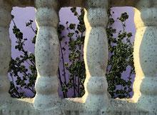 Blick durch die Betonpalisade in einen Garten