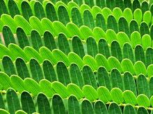 Chlorophylle beim Antrittsverlesen