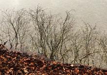 Wunderbare Natur, Impressionen und Spiegelung im Wasser vom Hallwilersee