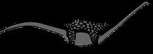 Bild eines Antarctosaurus