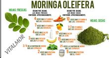 Moringa. Propiedades y Beneficios de la Moringa