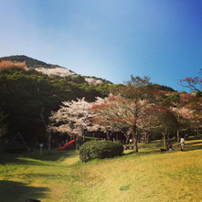 桜もまだ咲いているといいですね♪
