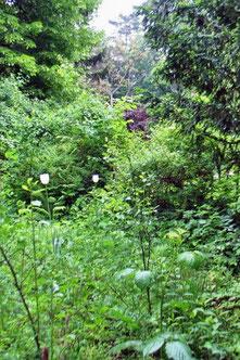 zwei weiße tulpen