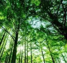 風見速英二撮影の林画像