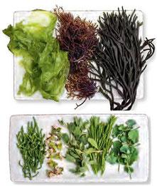 Algen und Küstengemüse