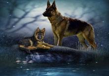 un berger allemand et son chiot par coach canin 16 éducateur canin en charente
