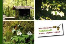 Dämmelwald-Broschüre
