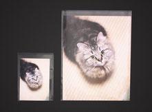 OPP袋 写真プリント用の画像