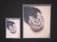 写真プリント用半透明袋の画像