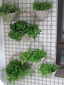 Balkon Küchenkräuter