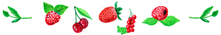 fruits au sirop framboiseraie