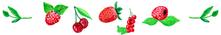 framboises fraises mûres cerises myrtilles mirabelles