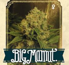 comprar semillas marihuana santander