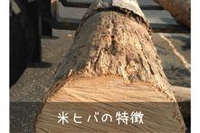 米ヒバの特徴