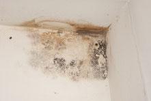 Gefährlicher Schimmel an den Wänden kann Krankheiten auslösen.