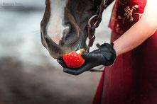 Конные фотосессии; фотосъемка с лошадьми