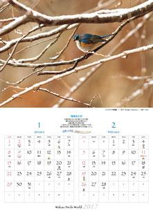 1〜2月 ルリビタキ(瑠璃鶲)