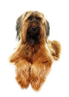 Hundeportrait, Foto: © cynoclub, Fotalia